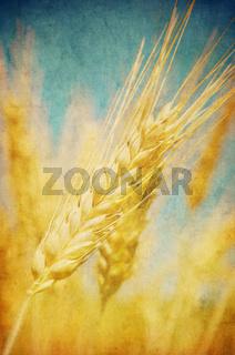Grunge image of wheat field