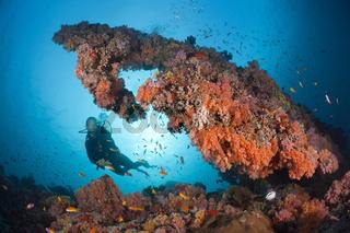 Tauchen an Korallenriff