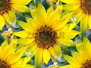 Sonnenblumen I