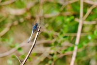The close up of dragon fly staying on top of stalk