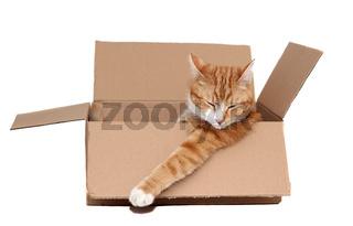 sleeping cute tomcat in removal box