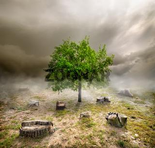 Green tree among the stumps