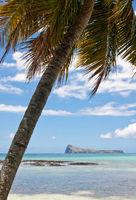Palm at Cap Malheureux