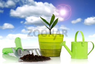 Plant with garden tools isolated over white background.