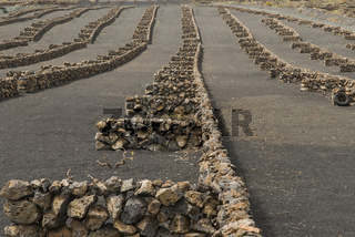 Trockenfeld mit Steinmauern, Lanzarote