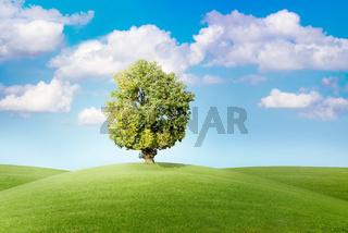 Baum auf grüner Wiese vor blauem Himmel