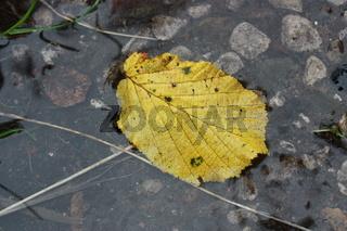 gelbes Blatt in Regenwasser