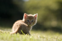 Cat, kitten in the back-light