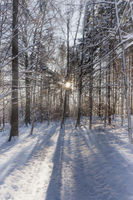 Wald im Winter | Forest in winter