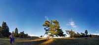 Knotty pine panorama