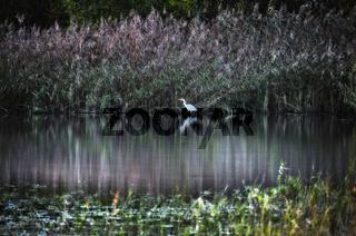 Naturschutzgebiet Bergehalde Luisenthal, Saarland, Germany