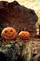 Halloween pumpkins on rocks with leaves and berrie