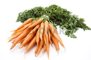 Karotten frisch