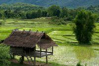 Ricefield from Luang Prabang