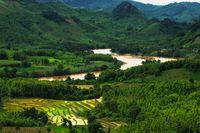 Reisfeld in Laos