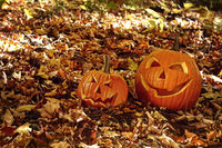 Funny pumpkins in leaves on the ground