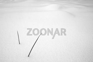 Minimalistischer Winter
