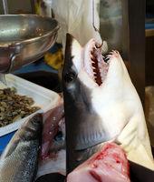 Hai am Fischmarkt
