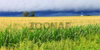 Thunderstorm Over Illinois Cornfield