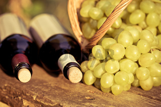 Red and white wine bottles and bunch of grapes