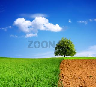 World ecology