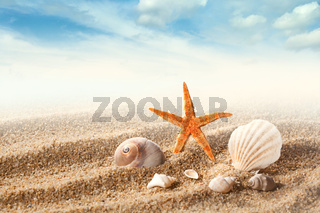 Sea shells on the sand against blue sky