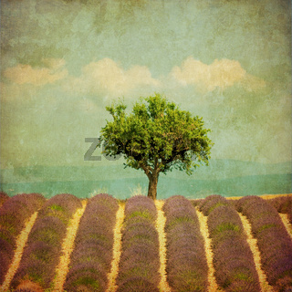 vintage image of a tree in lavender field
