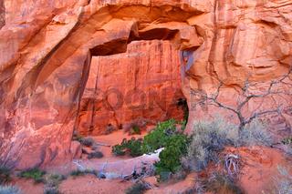 Pine Tree Arch Utah