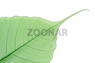 Dry color leaves on white background