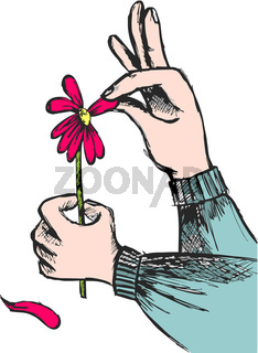 Love question: hands plucking off the petals of a red flower