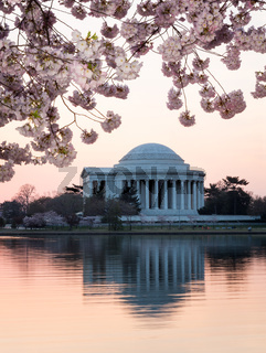 Cherry Blossom and Jefferson Memorial at sunrise