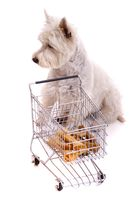 Dog sitting at the shopping cart