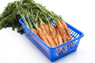 Karotten geerntet