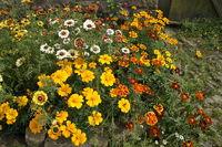summerflowers in farmer garden