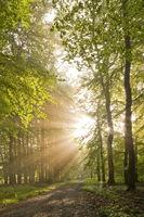 Sonnenlicht durchflutet Wald