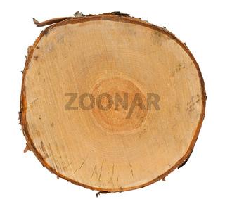 Cross section of tree stump