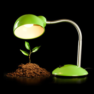 Young sprout and table lamp