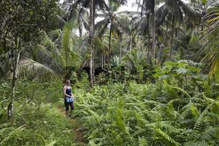 Wandern im Nationalpark Los Haitises, Dominikanische Republik