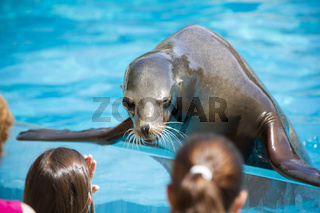 Sea dog playing with childs, seal