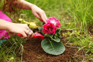 girl grow flower on green field
