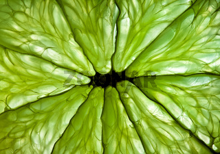 Photo of a citrus close up.