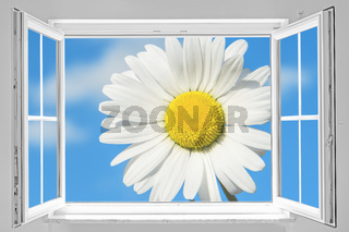 Open window with marguerite