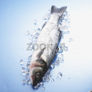 Whole Fish bxp159846h