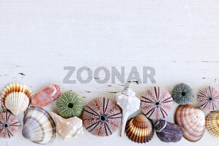 Background with seashells