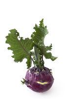cabbage turnip - brassica oleracea gongylodes -