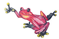 Red poison dart frog from Southern America isolated -  handmade watercolor  painting illustration on a white paper art background