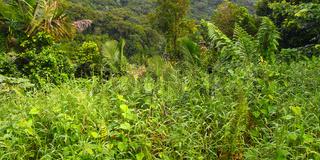 Tropical Vegetation Background