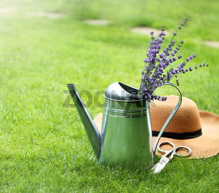 Lavender in watering can, hat and scissors