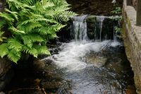 Waterfall and ferns