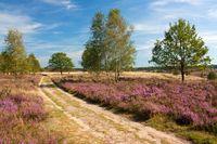 Lüneburger Heide, Weg durch Heidelandschaft